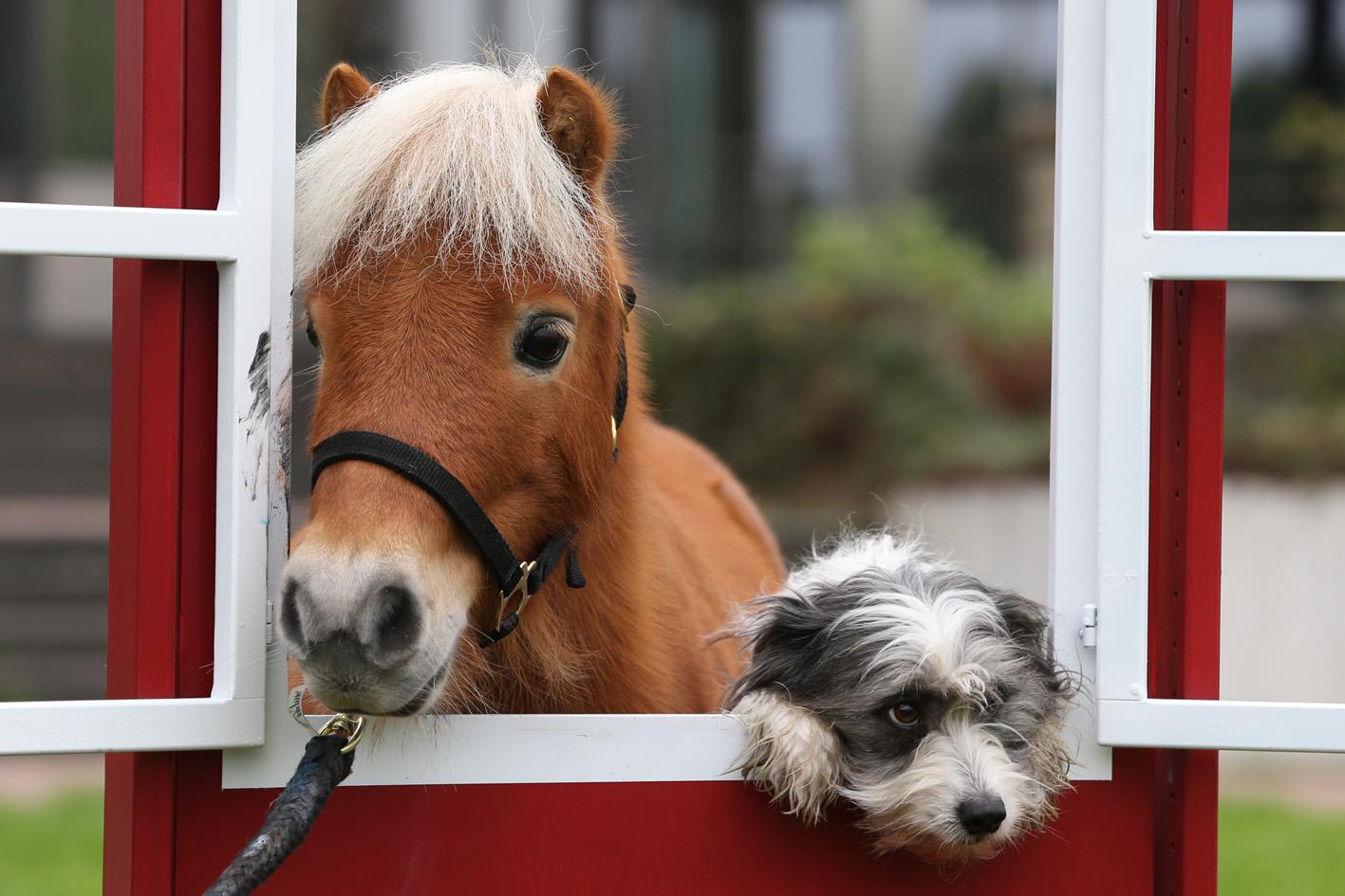 Hund Und Pferd Dortmund 2021
